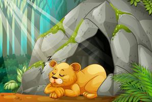 Petit lion dormant dans la grotte