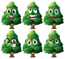 Expression de l'arbre vecteur