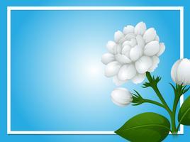 Modèle de bordure avec des fleurs de jasmin blancs vecteur