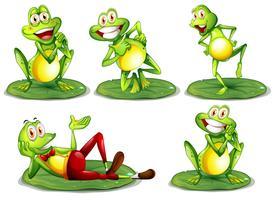 Ensemble de grenouilles
