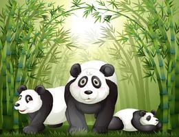 Trois gros ours dans la forêt tropicale vecteur