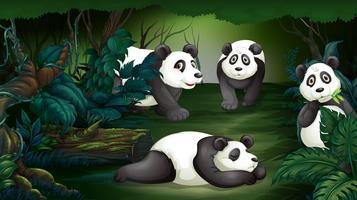 Panda dans la forêt sombre vecteur