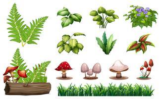 Ensemble de plantes forestières vecteur