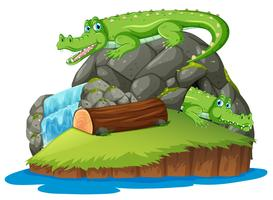 Crocodile sur l'île isolée