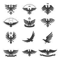 aigles en noir