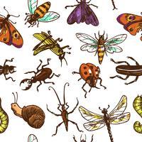 Insectes croquis couleur de motif sans soudure vecteur