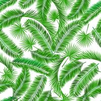 Motif sans couture de palmiers tropicaux