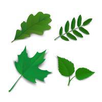 Été, chêne, érable, frêne, bouleau, feuilles vecteur