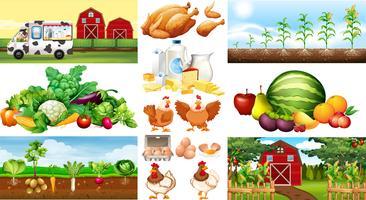 Scènes de ferme avec des légumes et des poulets vecteur