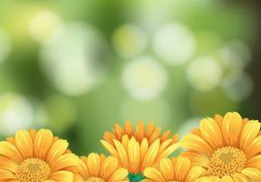 Scène de fond avec des fleurs jaunes dans le jardin vecteur