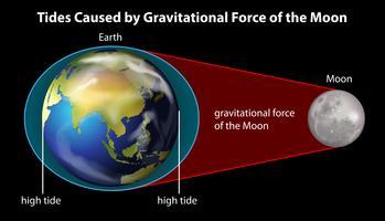 La terre et la lune vecteur