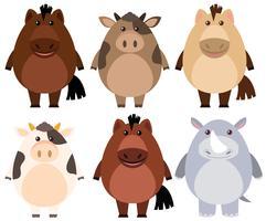 Chevaux et vaches au visage heureux