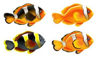 Quatre poissons colorés vecteur