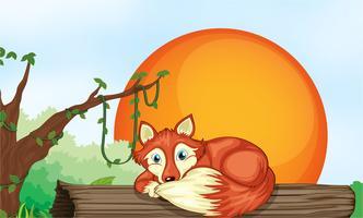 renard reposant sur du bois