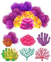 Récif corallien sur fond blanc vecteur