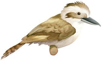 Kookaburra vecteur