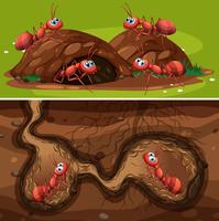 Fourmis de feu dans le nid