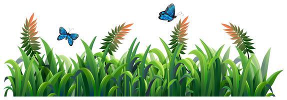 Fleur et herbe pour la décoration vecteur