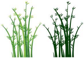 Bambous en vert vecteur