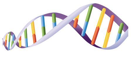 Hélice d'ADN vecteur