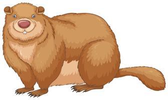 Marmotte vecteur