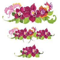 Modèle d'éléments de fleurs tropicales