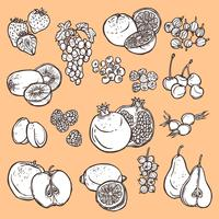 Fruits et baies croquis icônes vecteur