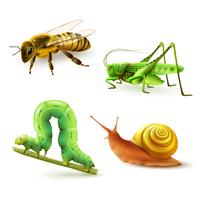 Ensemble réaliste d'insectes vecteur