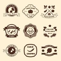 Jeu d'étiquettes de légumes vecteur