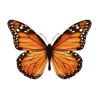 Papillon réaliste isolé