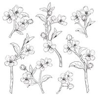 Arbre en fleurs. Collection de jeu. Branches de fleurs botaniques dessinés à la main sur fond blanc. Illustration vectorielle vecteur
