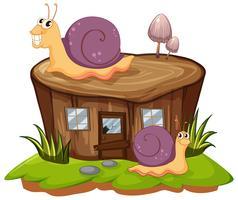 Deux escargots rampant sur la souche vecteur