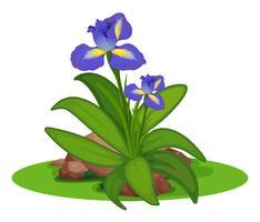 Violet irlandais dans la brousse vecteur