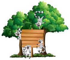 Modèle de planche de bois avec des lémuriens en arrière-plan