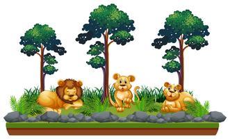 Lion isolé dans un paysage naturel