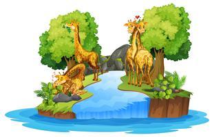 Girafe sur la nature isolée