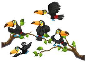 Toucan sur une branche d'arbre vecteur