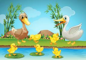 Mère canard et canetons à la rivière vecteur