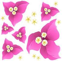 Design de fond transparente avec des fleurs de papier roses