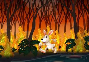 Un lapin courant dans un feu de forêt
