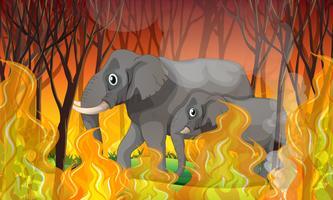 Éléphant fuyant un feu de forêt