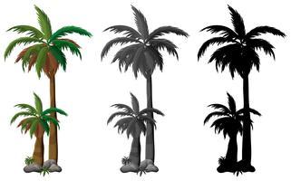 Ensemble de palmier