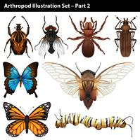 Arthropodes vecteur