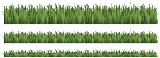 Fond transparent pour l'herbe verte vecteur