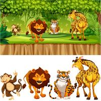 Animal sauvage dans la jungle