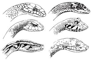 Croquis de serpents vecteur