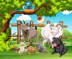 Animaux de la ferme vivant dans la ferme