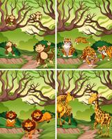 Animal sauvage en forêt vecteur
