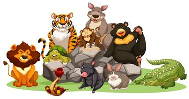 Différents types d'animaux sauvages sur le rocher