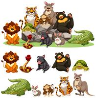 Différents types d'animaux sauvages vecteur